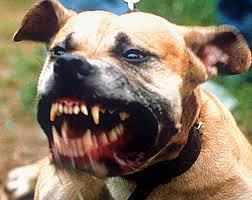 Resultado de imagem para TWO Pitbulls Ferociously Attack Woman