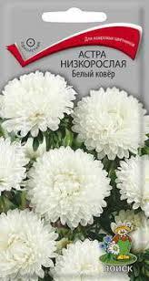 <b>Семена</b> цветов Поиск <b>Астра</b> низкорослая <b>Белый ковер</b>, 150105 ...