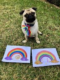 <b>rainbow pug</b>   KCS