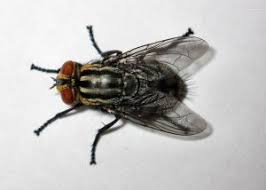 Resultado de imagen de insectos en guerras