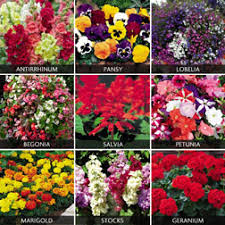 Image result for bedding plants
