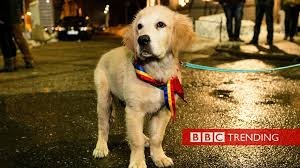 How <b>cute dogs</b> became a symbol of protest - BBC News