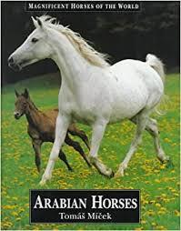 Arabian Horses (<b>Magnificent Horses</b> of the World): Micek, Tomas ...