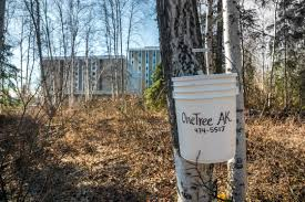 Image result for image of birch sap