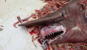 怪物,奇形,醜い,グロ,生き物,動物,深海生物,水棲生物,岩場,