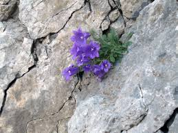Αποτέλεσμα εικόνας για μαδημένο λουλούδι
