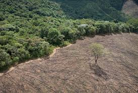 three key lessons from s atilde o paulo s water crisis the huffington post 2015 03 19 1426781859 4601007 deforestation jpg
