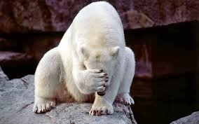 the polar bear is very a shame and images the polar bear is very a shame