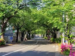 <b>Beautiful SAKURA</b> place in Tokyo !!!! - Review of Kamuro Slope ...