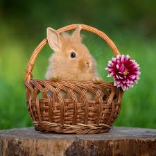 NATIONAL BUNNY DAY - September 28, 2019   National Today