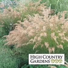 Achnatherum calamagrostis  Silver Spike Grass   High Country ...
