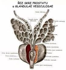 Резултат с изображение за простата