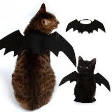 <b>Одежда для кошек</b> с бесплатной доставкой в Принадлежности ...