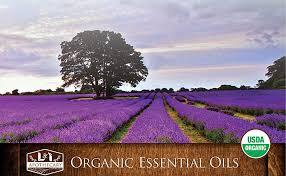 1 fl. Oz / 30 ml Organic Ginger Essential Oil, USDA ... - Amazon.com