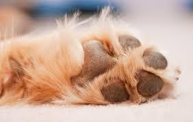 Γιατί γλείφουν τα πόδια τους οι σκύλοι;