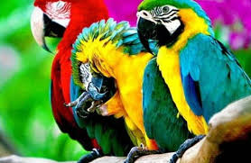 Αποτέλεσμα εικόνας για παπαγαλοι