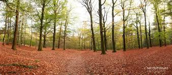Afbeeldingsresultaat voor kaapse bossen