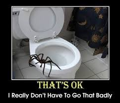 spiders are evil on Pinterest   Spiders, Spider Meme and Toilets via Relatably.com