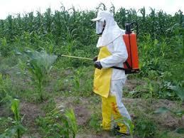 Image result for perigo agrotóxicos