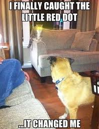 The cat has glowing eyes just for catching the red dot. | The Cat ... via Relatably.com