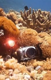 <b>Meikon</b>.ru - Все краски подводного мира   ВКонтакте