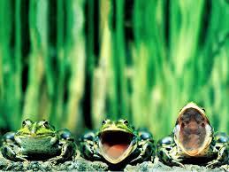 """Résultat de recherche d'images pour """"grenouilles"""""""