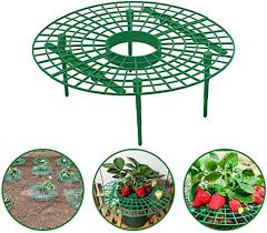 Strawberry Supports Stand Plant Climbing Vine Pillar ... - Amazon.com
