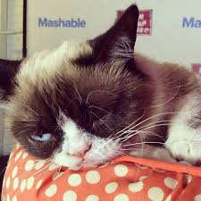 Grumpy Cat Meme Generator | POPSUGAR Tech via Relatably.com