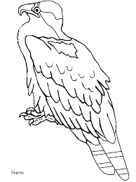 Small Picture Vulture Coloring Page Printable Birds Vulture Animals Coloring