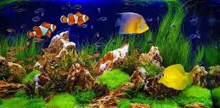 <b>Fish Tanks</b> and <b>Aquariums</b> for Sale | Aquacadabra