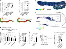 Affinity purification of cell-specific mitochondria from <b>whole animals</b> ...