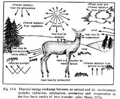 ecology essaythe role of temperature as an ecology factor   essay clip image