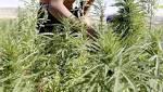 Hezbollah control of the Bekaa Valley threatened as Lebanon mulls legalising medicinal cannabis