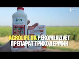 Эффективный биофунгицид Триходермин: описание ...