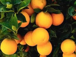 """Képtalálat a következőre: """"narancs"""""""