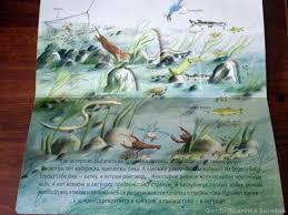 "Отзыв на книгу Анн-Софи Боманн и Клотильд Перрен ""<b>Природа</b> ..."