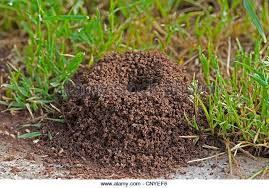 Image result for images of ants nest