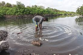 the story of mumbai s abused polluted mithi river is anything but the story of mumbai s abused polluted mithi river is anything but sweet