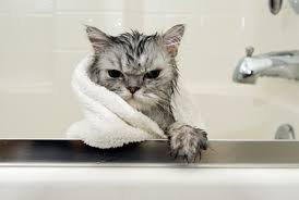 Image result for cat getting groomed