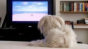 Tι είναι το Dog TV;