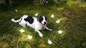 <b>Cute Dog</b> Between <b>Flowers</b> by Life_Music | VideoHive