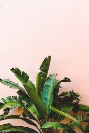 pink art bedroom photography leaves to love tropical leaf decor ideas decor leaf decor