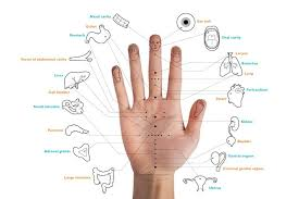 Image result for korean hand acupuncture chart