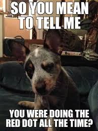 Suspicious dog - WeKnowMemes Generator via Relatably.com