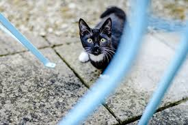 Top tips for keeping your cat <b>cool</b> in <b>summer</b> | Blue Cross