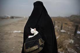 Bildergebnis für صور من ايمن الموصل الحياة تعود