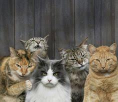 Image result for cat gang