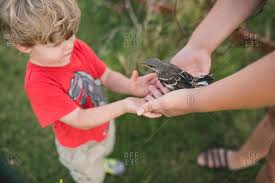 Image result for pictures of people holding bird in hand