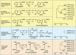 tetrahydrobiopterin biochemistry and pathophysiology figure