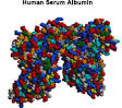 Images & Illustrations of albumin